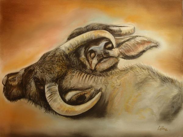 Water buffalos1