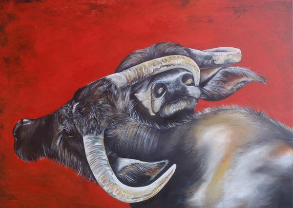 Water buffalos2